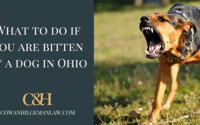 What To Do If You Are Bitten By a Dog in Ohio